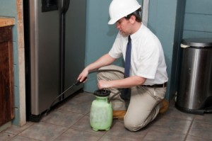 Essential Tips for Choosing the Best Pest Management Company